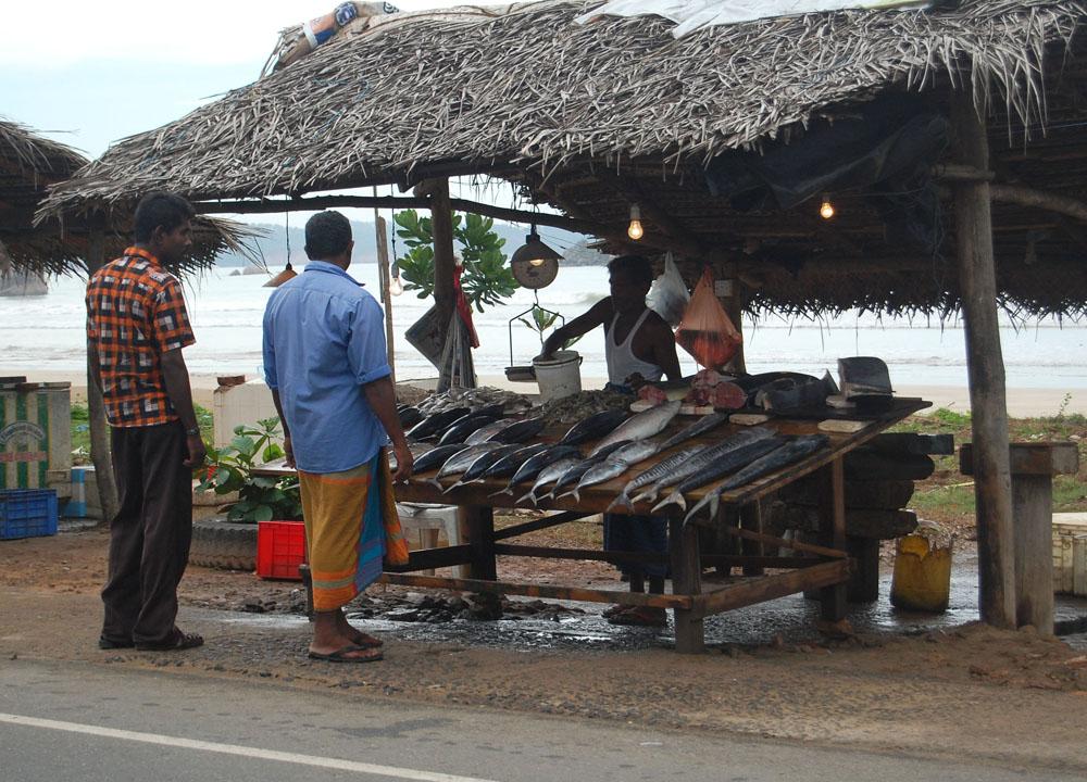 Southern Coast Fish Stalls, South Sri Lanka Tour, Independent Travel