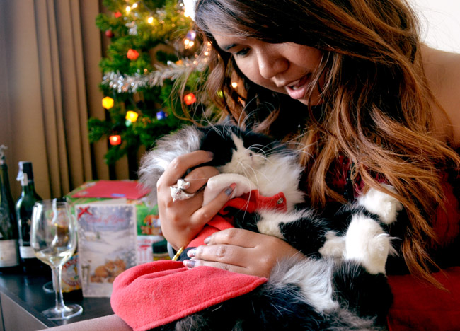 Christmas Cat Costume, Christmas in Bangkok and Southeast Asia