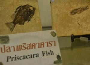 Fish Fossils, Bangkok Planetarium, Thailand, Southeast Asia