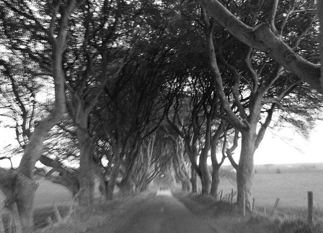 Dark Hedges Ballymoney Antrim Coast Top 10 Northern Ireland Attraction