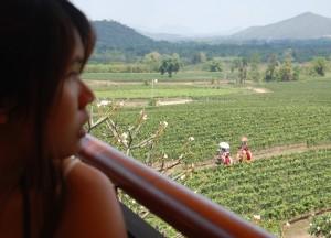 Elephants, Hua Hin Hills Vineyard Tour, Thailand, Southeast Asia