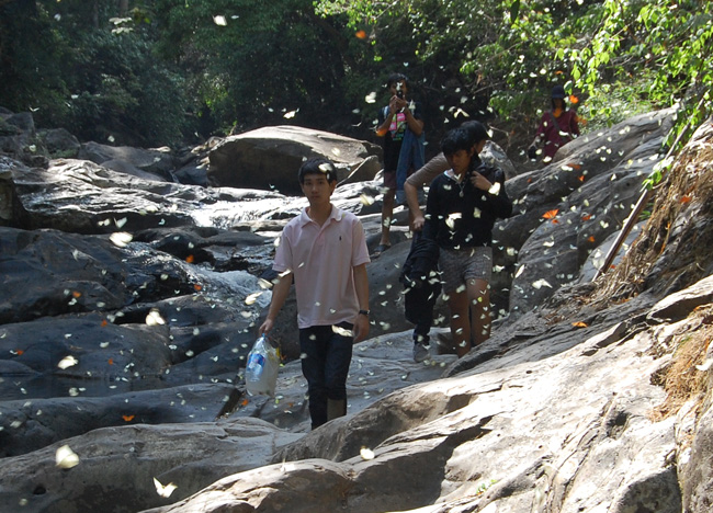 Butterflies, Pala U Waterfall, Hua Hin Hills, Thailand, Southeast Asia