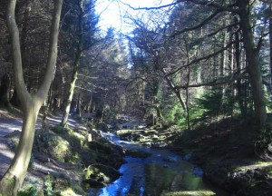 Tollymore Forest Park River, Top 10 Northern Ireland Attractions NI