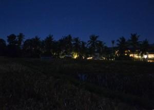 Rice Fields, Bebek Bengil, Best Restaurants in Ubud Centre, Top 3 Bali Food