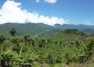 Ella Hills of Tea, South Sri Lanka Tour, Independent Travel Asia