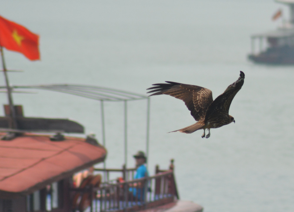 Flying Eagles, Best Halong Bay Overnight Cruise Tours from Hanoi