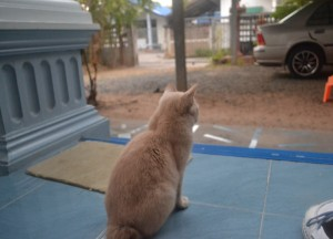 Waiting for Passing Monks, Isaan Tours and Phanom Rung Thailand